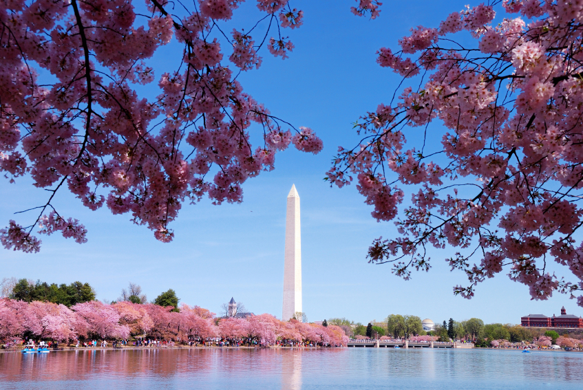Washington DC in April, showing the Washington monument surrounded by flowering blooms