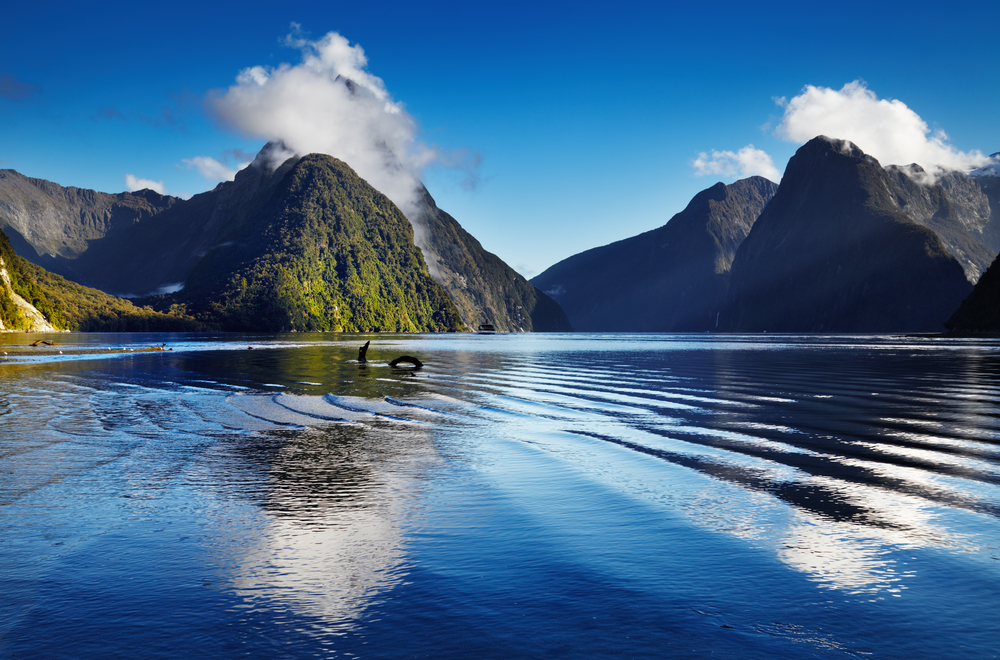 The Milford Sound fjord in South Island, New Zealand