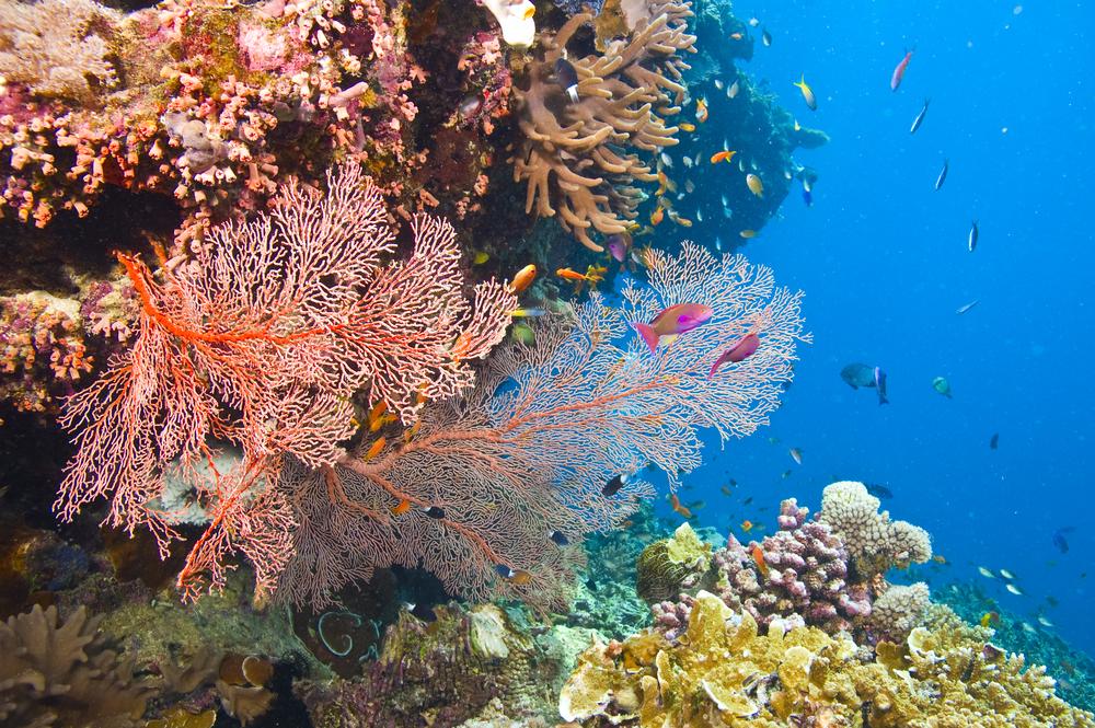 Underwater views of the Great Barrier Reef in Australia.