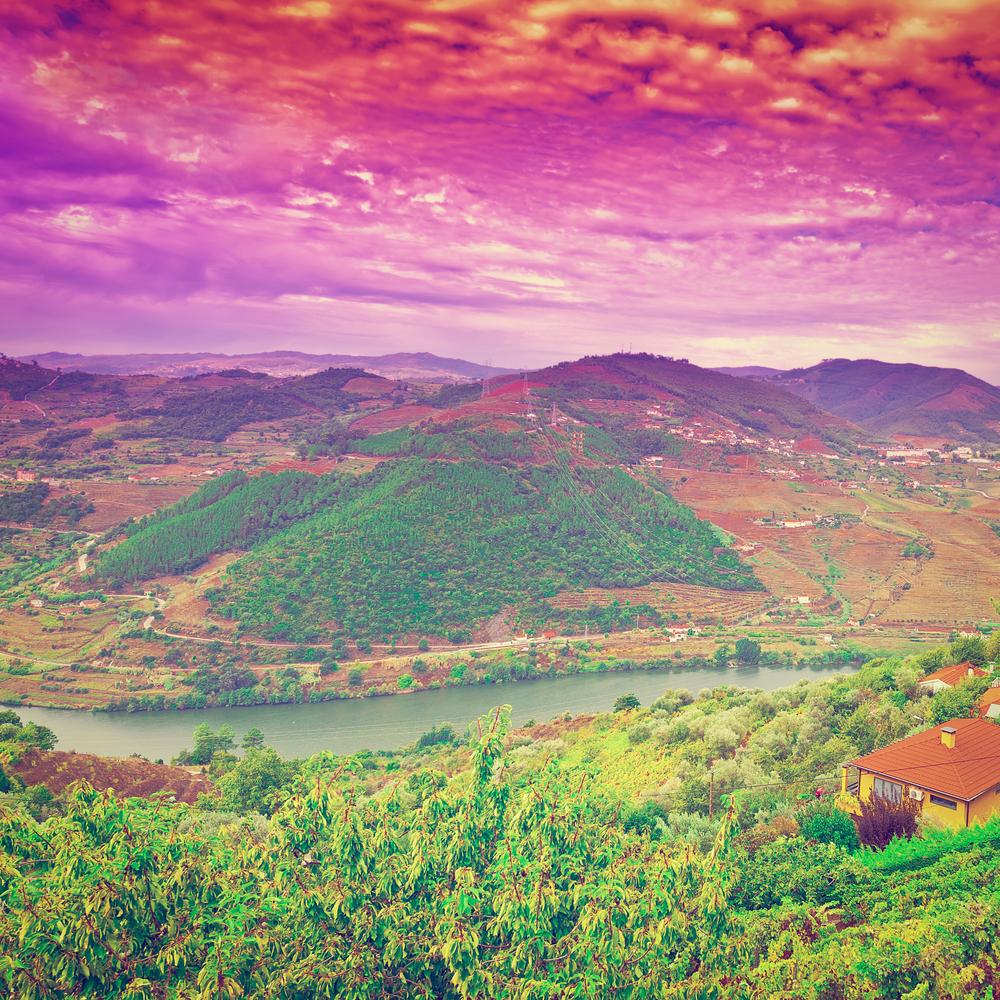 Beautiful vineyard in Portugal.