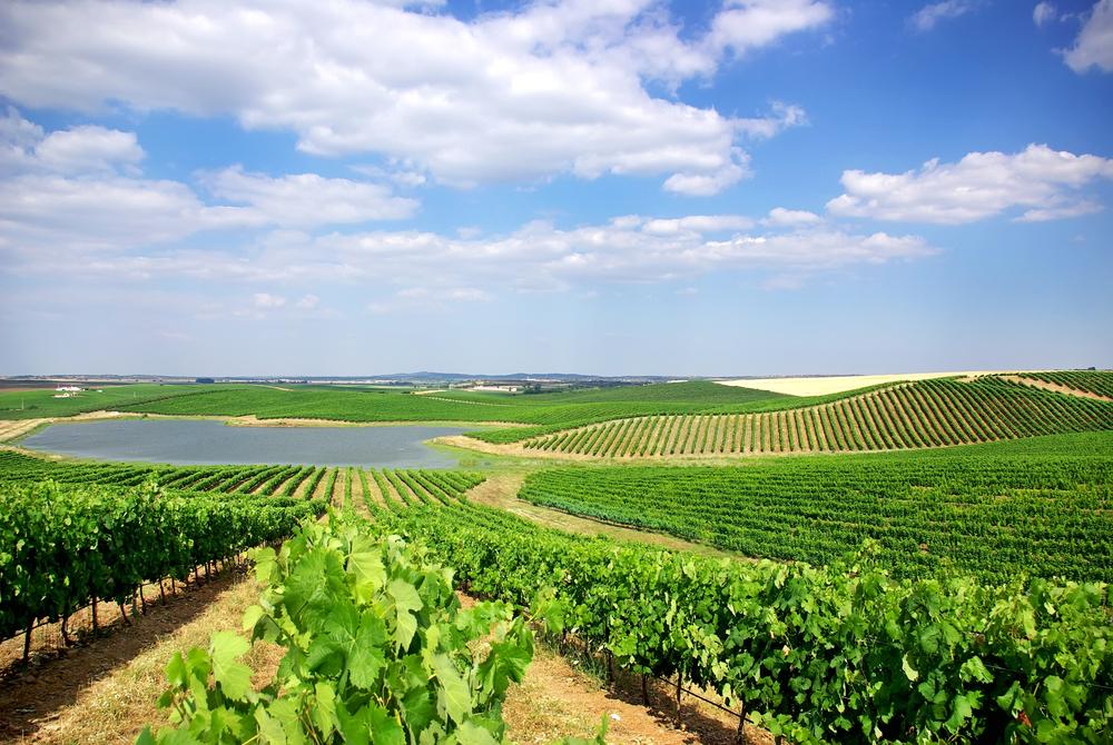 Breathtaking views of a vineyard in Alentejo, Portugal.