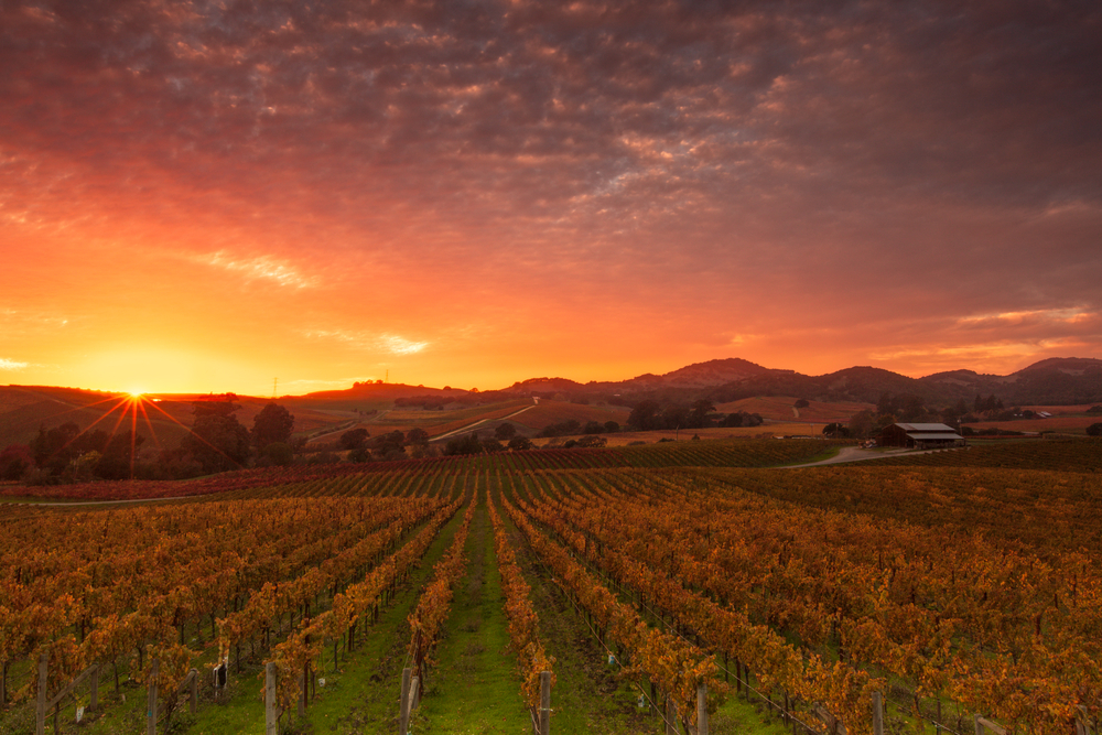 Sunrise views of Napa Valley vineyards.