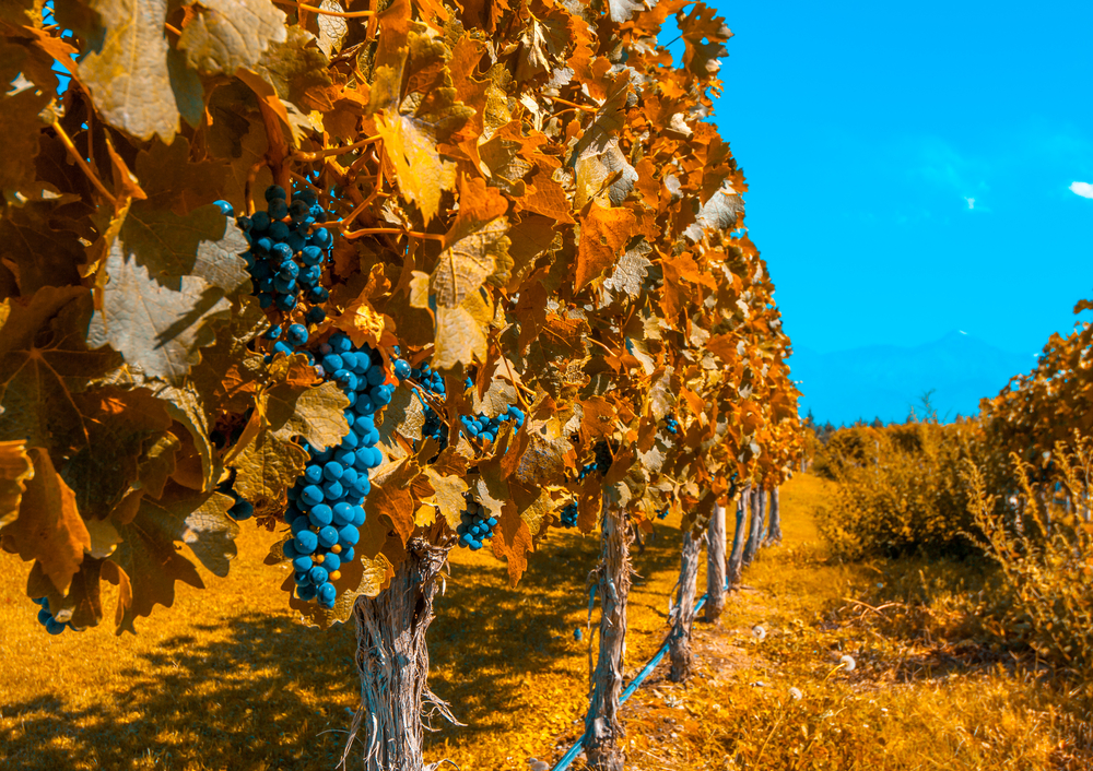 Mendoza Wine Travel Guide