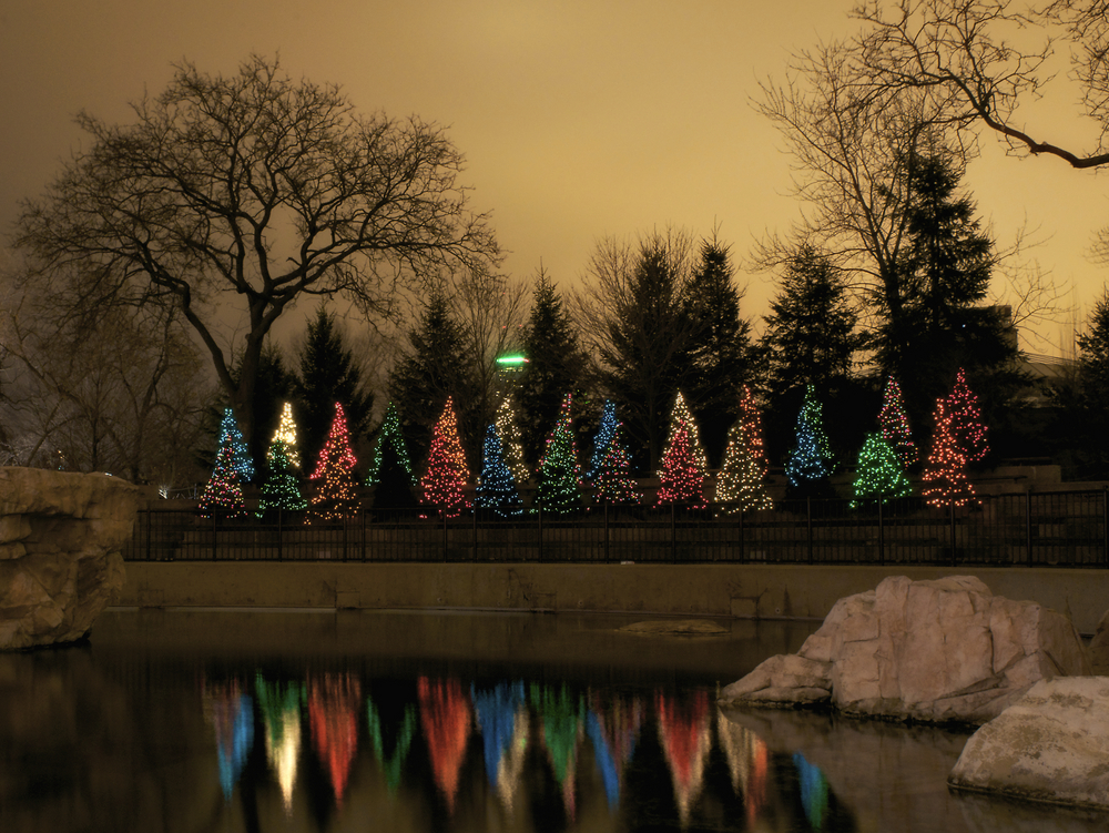 Christmas lights at the Chicago zoo