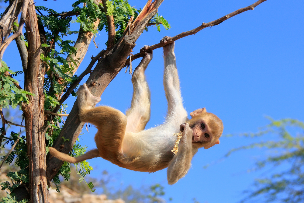 happy monkey hanging off a branch