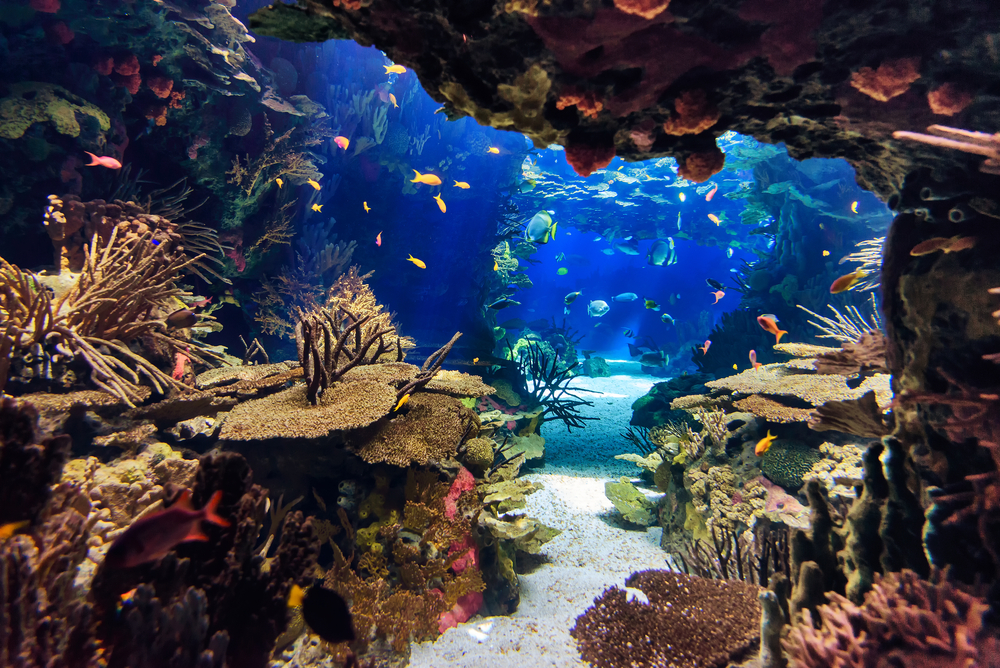 Visiting the pittsburgh zoo ppg aquarium vine vera stores for Fish store pittsburgh