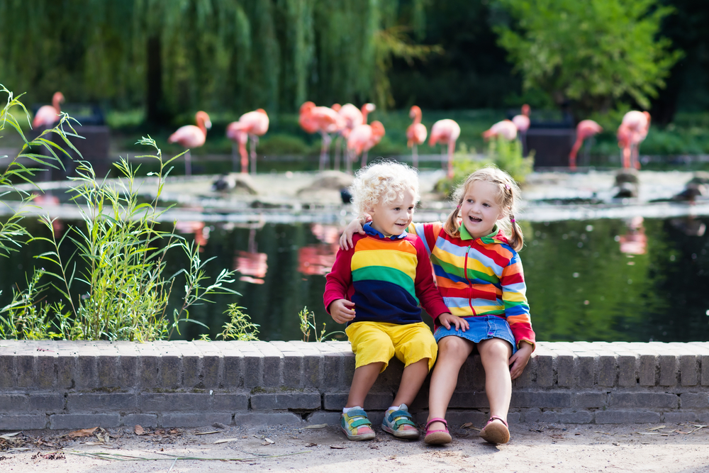 Kids with flamingos in background