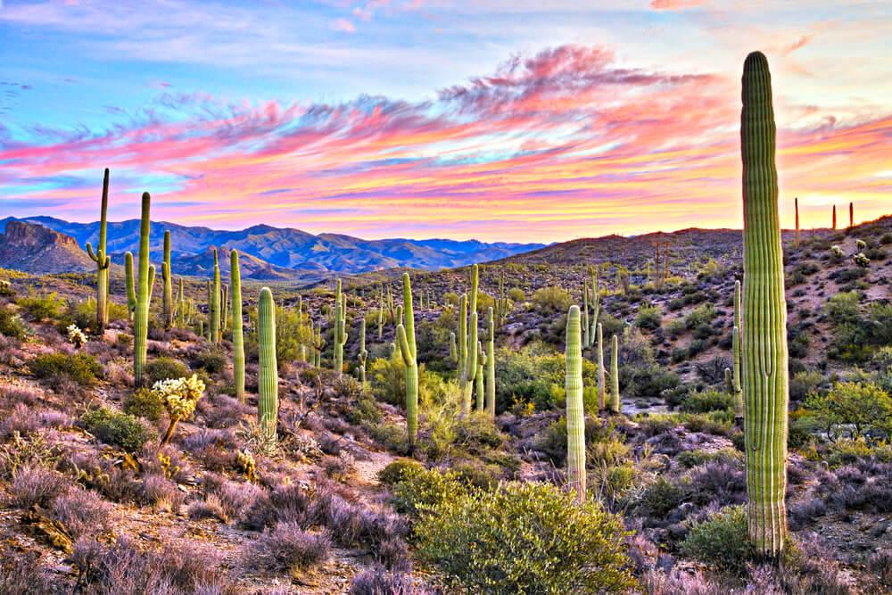 View of Arizona's wide desert plains