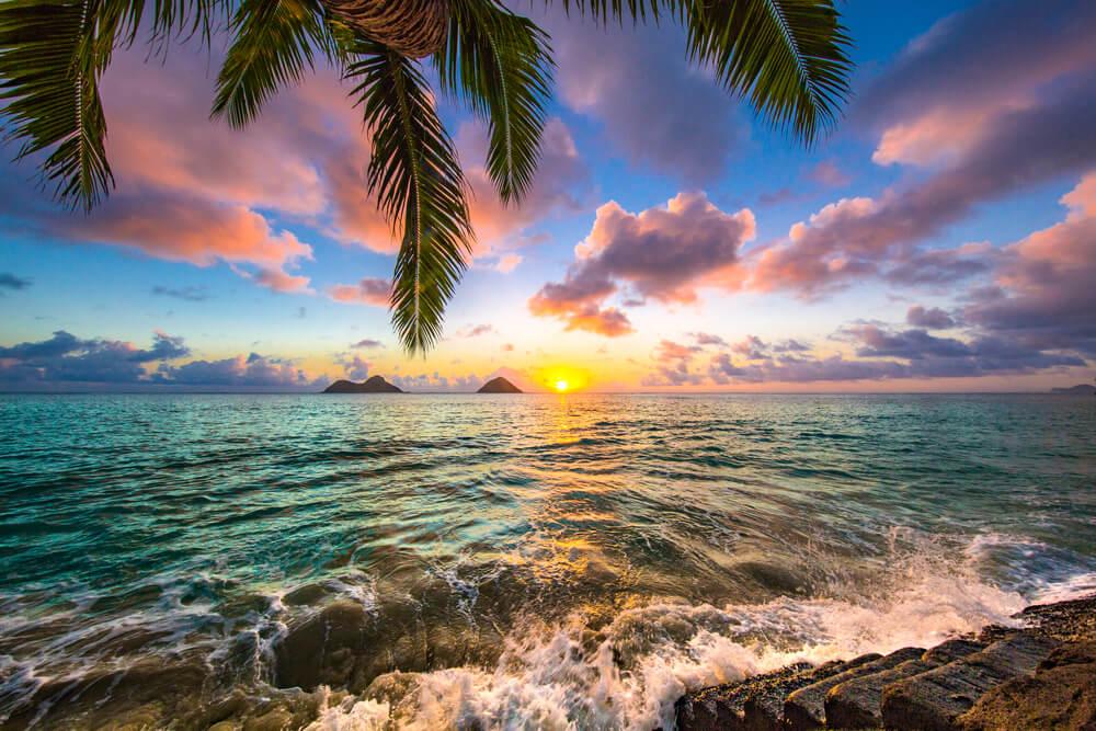 VINE VERA banner presents beautiful hawaii landscape